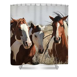 Painted Wild Horses Shower Curtain by Athena Mckinzie