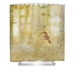 Painterly Image Of A Male Pine Grosbeak Shower Curtain by Roberta Murray