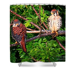 Shower Curtain featuring the photograph Caribbean Falcons by The Art of Alice Terrill