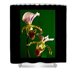 Pair Of Lady Slipper Orchids Shower Curtain