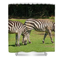 Shower Curtain featuring the photograph Pair Of Zebras by Charles Beeler