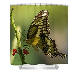 Shower Curtain featuring the photograph Palamedes Swallowtail by Jane Luxton