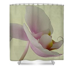 Pale Orchid On Cream Shower Curtain by Barbie Corbett-Newmin