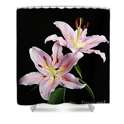 Pale Pink Asiatic Lilies Shower Curtain by Judy Whitton