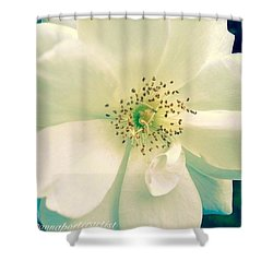 Pale White Beauty Shower Curtain