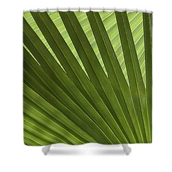 Palm Abstract Shower Curtain by Patty Colabuono