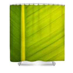 Palm Leaf Macro Abstract Shower Curtain by Adam Romanowicz