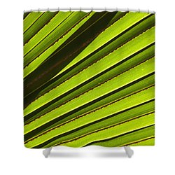 Palm Lines Shower Curtain by Mike  Dawson