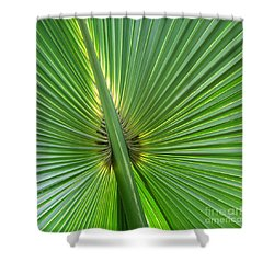 Shower Curtain featuring the photograph Palm Love by Roselynne Broussard