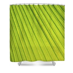 Palm Tree Leaf Abstract Shower Curtain by Elena Elisseeva
