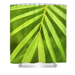 Palm Tree Leaf Shower Curtain by Elena Elisseeva