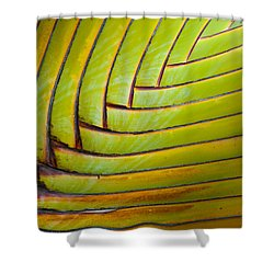 Palm Tree Leafs Shower Curtain by Sebastian Musial