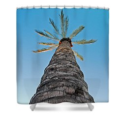 Palm Tree Looking Up Shower Curtain
