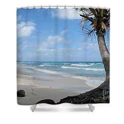 Palm Tree On The Beach Shower Curtain
