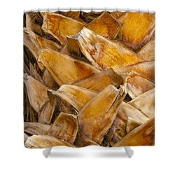 Palm Tree Trunk Detail Shower Curtain by Bob Phillips