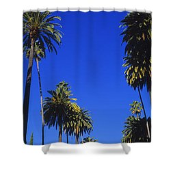 Palm Trees Along A Road, Beverly Hills Shower Curtain
