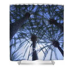 Shower Curtain featuring the photograph Palm Trees In The Sun by Jerry Cowart