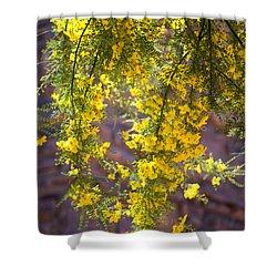 Palo Verde Blossoms Shower Curtain