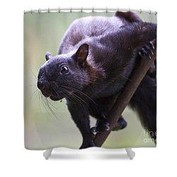 Panamanian Tree Squirrel Shower Curtain by Heiko Koehrer-Wagner