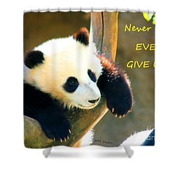 Panda Baby Bear Never Ever Ever Give Up Shower Curtain