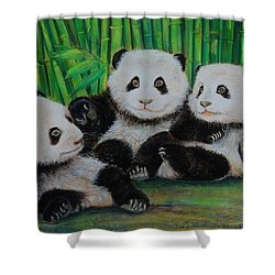 Panda Cubs Shower Curtain