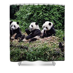 Pandas In China Shower Curtain by Joan Carroll