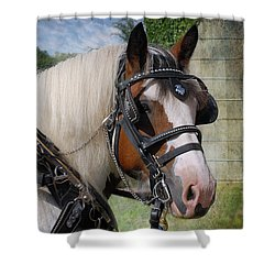 Pandora In Harness Shower Curtain by Fran J Scott