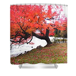 Panorama Of Red Maple Tree, Muskoka Shower Curtain by Henry Lin