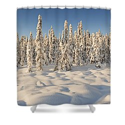 Panoramic View Of Snow-covered Spruce Shower Curtain by Ray Bulson