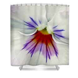 Pansy Flower 11 Shower Curtain by Pamela Critchlow