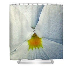 Pansy Flower 19 Shower Curtain