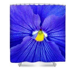 Pansy Flower 37 Shower Curtain by Pamela Critchlow