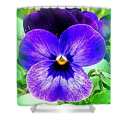 Pansy Shower Curtain by The Creative Minds Art and Photography