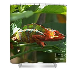 Shower Curtain featuring the photograph Panther Chameleon Madagascar 1 by Rudi Prott