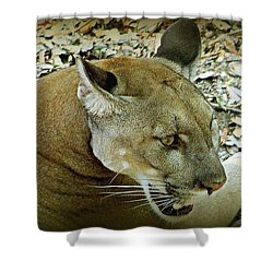 Shower Curtain featuring the photograph Panther by Debra Forand