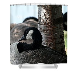 Shower Curtain featuring the photograph Pap Daddy Big Spring Park by Lesa Fine