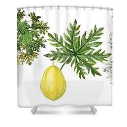 Papaya Shower Curtain by Anonymous