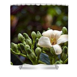Papaya Flower Shower Curtain