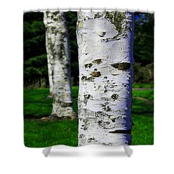 Paper Birch Trees Shower Curtain by Aaron Berg