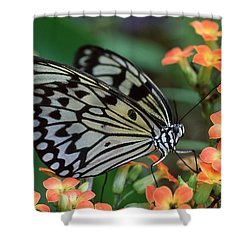 Paper Kite Butterfly Shower Curtain