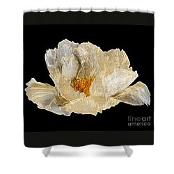 Paper Peony Shower Curtain