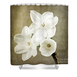 Paper Whites Shower Curtain