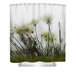 Papyrus Shower Curtain by Menachem Ganon