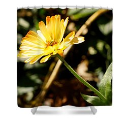 Shower Curtain featuring the photograph Parade by Photographic Arts And Design Studio