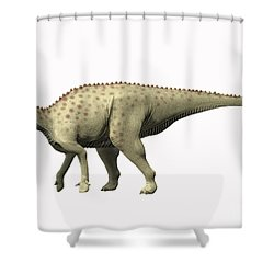 Pararhabdodon Isonensis, Late Shower Curtain by Nobumichi Tamura