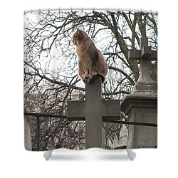 Paris Cemetery Cats - Pere La Chaise Cemetery - Wild Cats On Cross Shower Curtain by Kathy Fornal