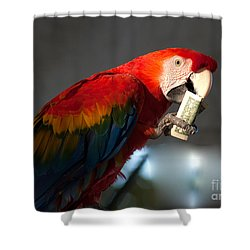 Shower Curtain featuring the photograph Parrot Eating 1 Dollar Bank Note by Gunter Nezhoda
