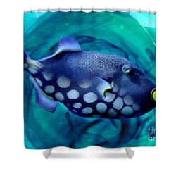 Shower Curtain featuring the photograph Parrotfish by Janette Boyd