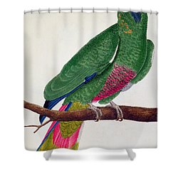Parrot Shower Curtain by Francois Nicolas Martinet