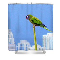 Parrot Shower Curtain by J Anthony